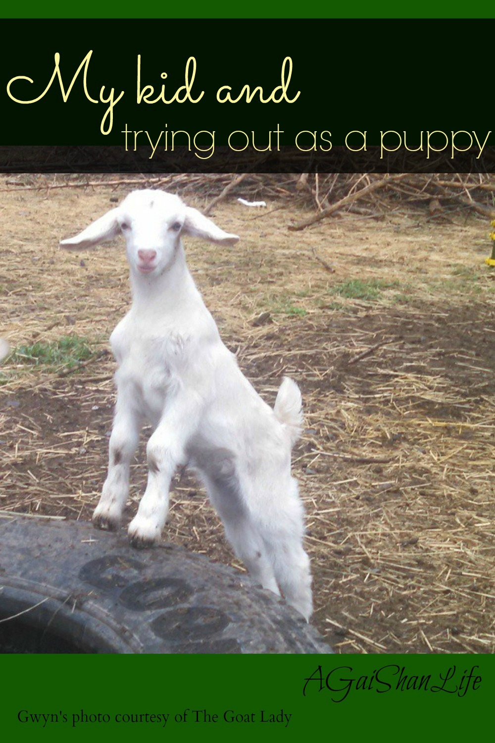 My kid's trying out for Team Puppy. Find The Goat Lady at Manorofmixedblessings.com