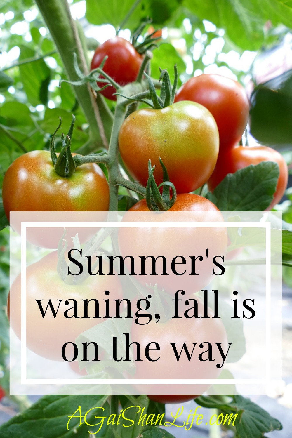 Summer's waning, what's next?